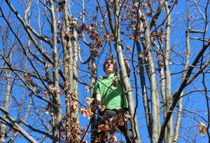 Baumschnitt ist wichtig für die Gesundheit der Bäume und für die Sicherheit der hier arbeitenden Menschen.