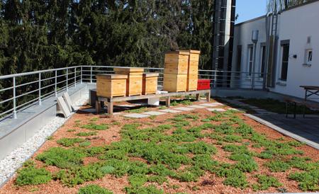 Bienenstöcke auf Terrasse_450